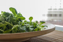 Plate of salad. On the wooden plate of lettuce, arugula, close-up royalty free stock images
