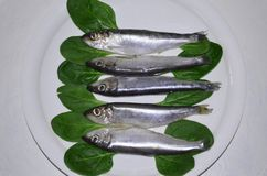 Sprats fish on a plate. Plate with salted Baltic sprat Royalty Free Stock Images