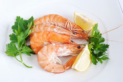 Plate with shrimps closeup Stock Image