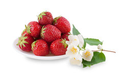 Plate with strawberries and jasmine branch. Royalty Free Stock Photography