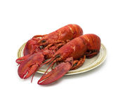 Plate with two red lobsters on white background Royalty Free Stock Photos