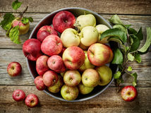 Plate of various fresh apples Stock Photos