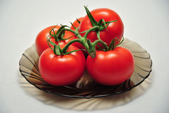 Plate of vine tomatoes royalty free stock photography