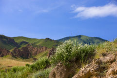 Plateau Assy in Kazakhstan, Asia. July morning. royalty free stock photos