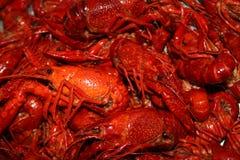 Plateau of boiled crawfish Royalty Free Stock Image
