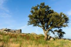 Plateau Citania de Sanfins Portugal Lizenzfreie Stockfotografie