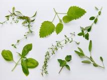 Plateau d'herbes Images stock