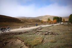 Plateau de couleur d'automne d'usine de forêt photos libres de droits