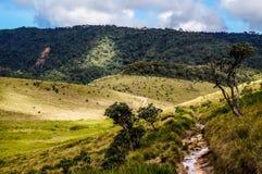 Plateau de Horton, Sri Lanka Images libres de droits