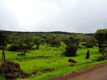 Plateau de Kaas - vallée des fleurs dans le maharashtra, Inde photos stock