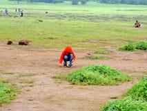 Plateau de Kaas - vallée des fleurs dans le maharashtra, Inde photos libres de droits