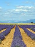 Plateau de Valensole (普罗旺斯),淡紫色 库存照片