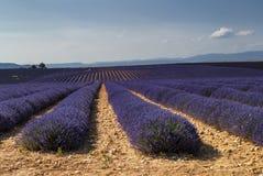 Plateau DE Valensole (de Provence), lavendel Stock Afbeelding
