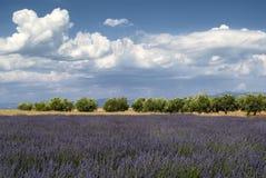 Plateau DE Valensole (de Provence), lavendel Stock Afbeeldingen
