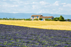 Plateau de Valensole (Provence), house. Plateau de Valensole (Alpes-de-Haute-Provence, Provence-Alpes-Cote d'Azur, France), country house and field of lavender Royalty Free Stock Photo