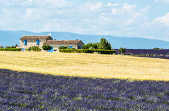Plateau de Valensole (Provence), house. Plateau de Valensole (Alpes-de-Haute-Provence, Provence-Alpes-Cote d'Azur, France), country house and field of lavender Stock Photos