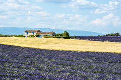 Plateau de Valensole (Provence), house and lavender fields. Plateau de Valensole (Alpes-de-Haute-Provence, Provence-Alpes-Cote d'Azur, France), country house and Royalty Free Stock Image