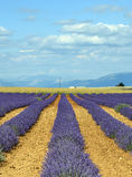 Plateau de Valensole (Provence), lavanda Fotos de archivo