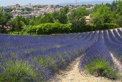 Plateau de Valensole (Provence), lavande Images libres de droits