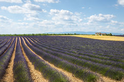 Plateau de Valensole (Provence), lavender. Plateau de Valensole (Alpes-de-Haute-Provence, Provence-Alpes-Cote d'Azur, France(, country house and field of Stock Photo