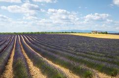 Plateau de Valensole (Provence), lavender Stock Photo