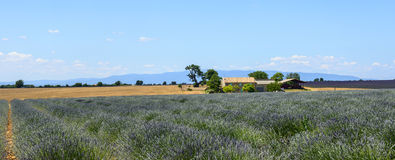 Plateau de Valensole (Provence), lavender. Plateau de Valensole (Alpes-de-Haute-Provence, Provence-Alpes-Cote d'Azur, France(, country house and field of Royalty Free Stock Images