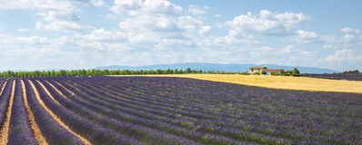 Plateau de Valensole (Provence), lavender. Plateau de Valensole (Alpes-de-Haute-Provence, Provence-Alpes-Cote d'Azur, France(, country house and field of Stock Photography