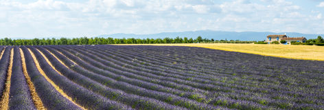 Plateau de Valensole (Provence), lavender. Plateau de Valensole (Alpes-de-Haute-Provence, Provence-Alpes-Cote d'Azur, France), country house and field of Royalty Free Stock Photography