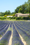 Plateau de Valensole (Provence), lavender. Plateau de Valensole (Alpes-de-Haute-Provence, Provence-Alpes-Cote d'Azur, France(, country house and field of Royalty Free Stock Photo