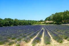 Plateau de Valensole (Provence), lavender. Plateau de Valensole (Alpes-de-Haute-Provence, Provence-Alpes-Cote d'Azur, France(, field of lavender Stock Photography