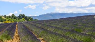 Plateau de Valensole (Provence), lavender. Plateau de Valensole (Alpes-de-Haute-Provence, Provence-Alpes-Cote d'Azur, France(, field of lavender Royalty Free Stock Photography
