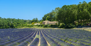 Plateau de Valensole (Provence), lavender Royalty Free Stock Images