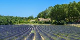 Plateau de Valensole (Provence), lavender. Plateau de Valensole (Alpes-de-Haute-Provence, Provence-Alpes-Cote d'Azur, France(, field of lavender Royalty Free Stock Images