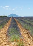 Plateau de Valensole (Provence), lavender. Plateau de Valensole (Alpes-de-Haute-Provence, Provence-Alpes-Cote d'Azur, France(, field of lavender Stock Image