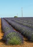 Plateau de Valensole (Provence), lavender. Plateau de Valensole (Alpes-de-Haute-Provence, Provence-Alpes-Cote d'Azur, France(, fields of lavender Stock Photo