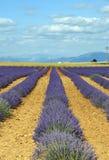Plateau de Valensole (Provence), lavender. Plateau de Valensole (Alpes-de-Haute-Provence, Provence-Alpes-Cote d'Azur, France(, fields of lavender Stock Photos