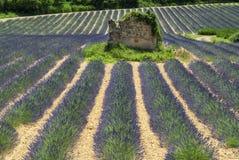 Plateau de Valensole (Provence), lavender Royalty Free Stock Images