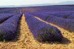 Plateau de Valensole (Provence), lavender Stock Image