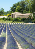 Plateau de Valensole (Provence), lavender and house. Plateau de Valensole (Alpes-de-Haute-Provence, Provence-Alpes-Cote d'Azur, France(, country house and field Royalty Free Stock Image