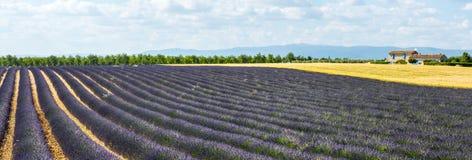 Plateau de Valensole (Provenza), lavanda Fotografia Stock Libera da Diritti