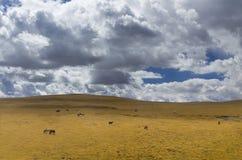 Plateau del Qinghai-Tibet della nuvola di autunno Fotografia Stock