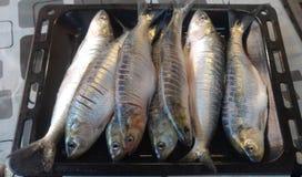 Plateau des poissons Images libres de droits