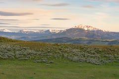 Plateau di Blacktail Fotografia Stock Libera da Diritti