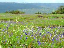 Plateau di Kaas - valle dei fiori in maharashtra, India fotografia stock