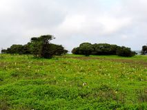 Plateau di Kaas - valle dei fiori in maharashtra, India immagini stock