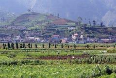 Plateau Dieng Stock Images