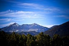 Plateau e foresta del Colorado Immagini Stock Libere da Diritti
