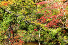 Plateau forest in autumn Stock Photos