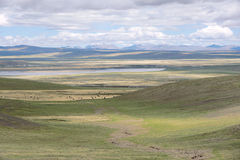 Plateau grassland scenery Stock Image