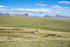 Plateau grassland scenery Royalty Free Stock Photos
